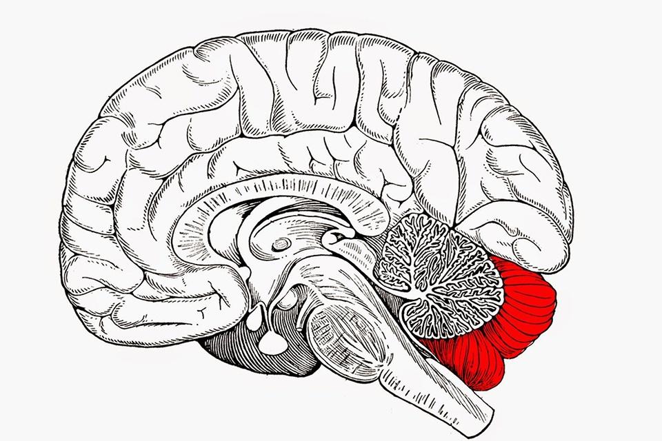 d-helize-blog-neuromarketing-ecommerce-1